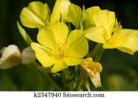Dicotyledoneae Flor Plantas Planta Flores Dicotyledon Primavera