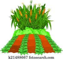 pflanzen, getreide