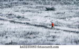 alone in the wilderness