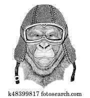 Gorilla, monkey, ape Frightful animal wearing vintage motorcycle helmet Tattoo, badge, emblem, logo, patch, t-shirt
