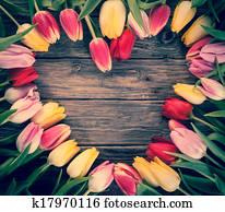Empty heart-shaped frame of fresh tulips