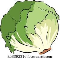 Hand drawn green lettuce