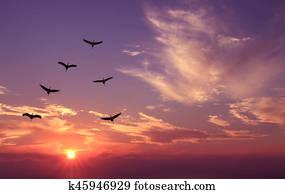 Birds at sunrise spring or autumn concept