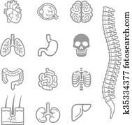 menschlich, innere organe, ausführlich, heiligenbilder, set.