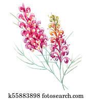 Watercolor australian grevillea flower