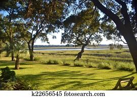 Tidal Salt Marsh on a Sunny Day
