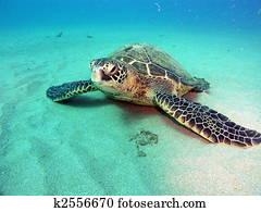 Turtle on bottom