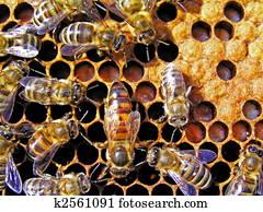 Queen bee behind work.