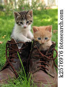 pair of kittens in high shoes outdoor