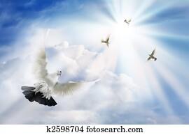 Doves soaring in solar beams