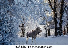 Weihnachtsbilder Elch.Weihnachtsbilder Wald Stock Fotos 1000 Weihnachtsbilder Wald
