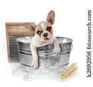 Dog Getting a Bath in a Washtub In Studio