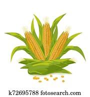 Corn cob and grain logo vector illustration.
