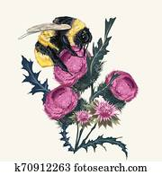 Beautiful botanical fashion illustration with vector bumblebee and thistle. Realistic vintage botanical style, insect sitting on wild purple burdock flower, macro object