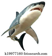 Great White Shark Body