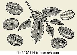 Coffee branch sketch