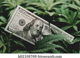 Money and cannabis. Pot finance. Revenues in the marijuana industry and the medical.