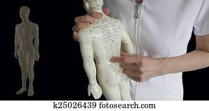 Acupuncture Model TCM Training