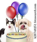 Buon Compleanno Festa Gatto Con Rosa Cupcake Archivio