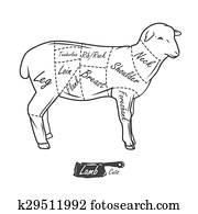 American cuts of lamb. Vintage typographic hand-drawn butcher cuts scheme