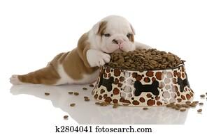 small bulldog puppy laying beside large bowl of dog food