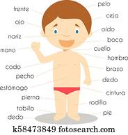 Human body parts vocabulary in spanish Vector Illustration