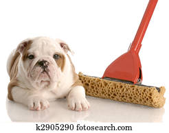 8d8edc81 Naughty puppy Stock Image | k4539103 | Fotosearch