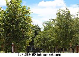Trees at Nursery