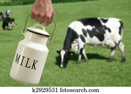 Milk pot farmer hand cow in meadow