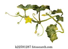 Watercolor garden vignette cucumbertwig with leaves, flowers and