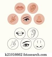 five senses,