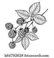 Blackberry branch drawing