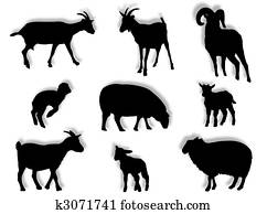 Sheep and goats in silhouette