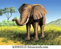 Wildlife Mammals