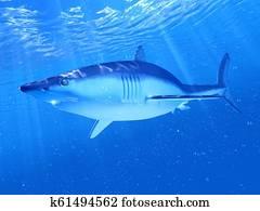a mako shark