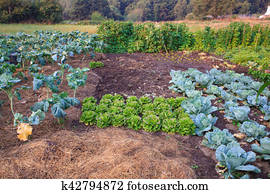 View of the vegetable garden