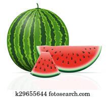 watermelon ripe juicy illustration