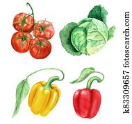 Set of vegetables vintage watercolor botanical illustration