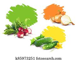 Vegetable set. Onion, radish, cucumber, blot. Harvest and Thanksgiving fruit of nature, food collection for restaurants, menus, posters and grocery bags. Graphics and color
