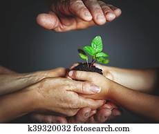 concept of family, kindness and parenting. Hands of mother and father and child holding a green sprout plant