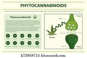 Phytocannabinoids horizontal infographic