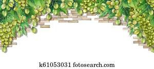 Watercolor bunches of white grapes hanging on the branch