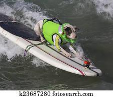 Surf Dog - Bull Terrier