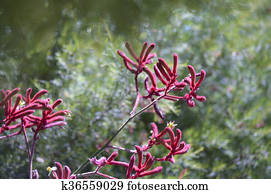 Images Fleur Fleurs Tete Fleur Fleur Kangourou Pattes Patte