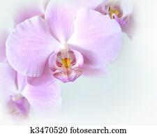 Orchids soft corner design
