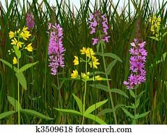 Wet meadow flowers