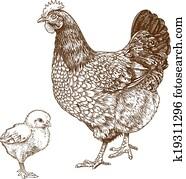 illustration of engraving chicken