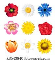 satz, von, frühjahrsblumen