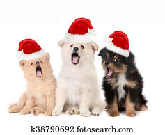 Christmas Puppies Wearing Santa Hats and Singing