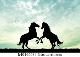 horses in love at sunset
